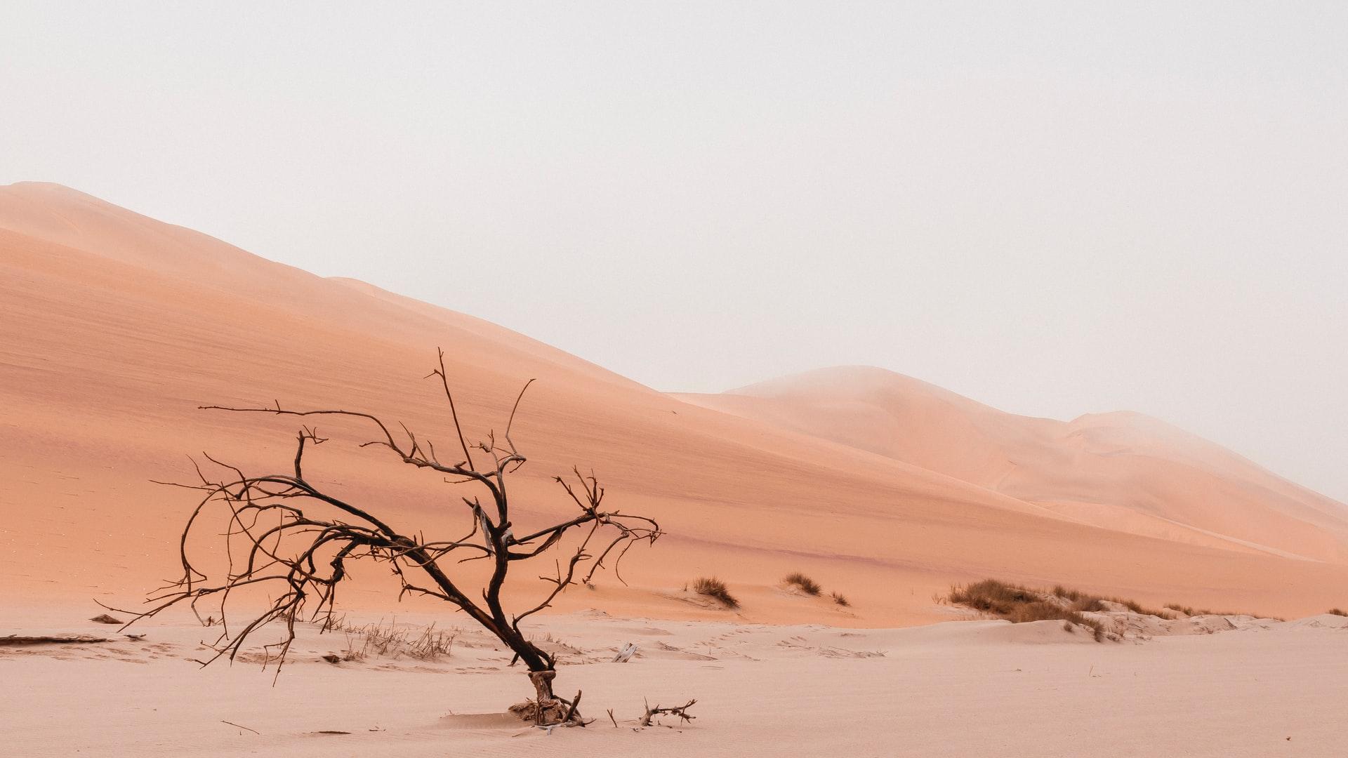砂漠化とは