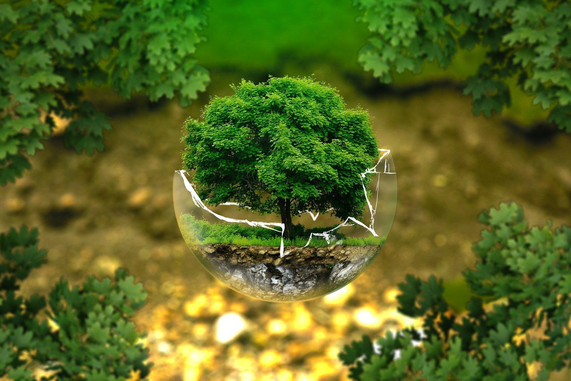森林破壊の現状を回避しよう