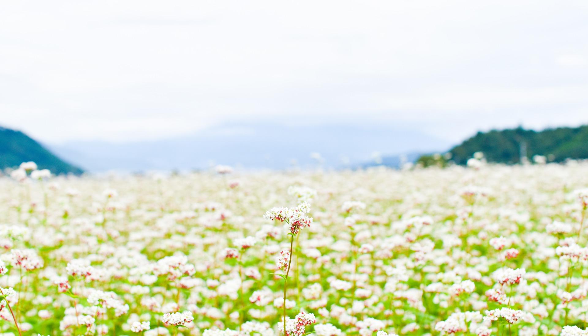 """美しい信州を次世代へ~""""チャレンジ800"""" ゴミ減量の推進"""
