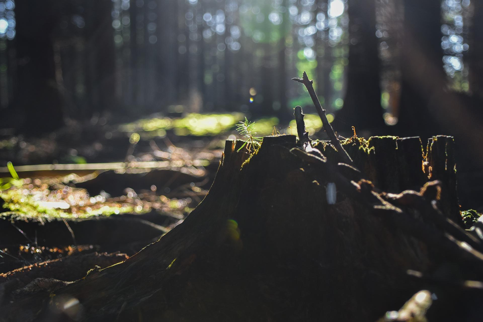 森林破壊の現状に対する 日本の取り組み