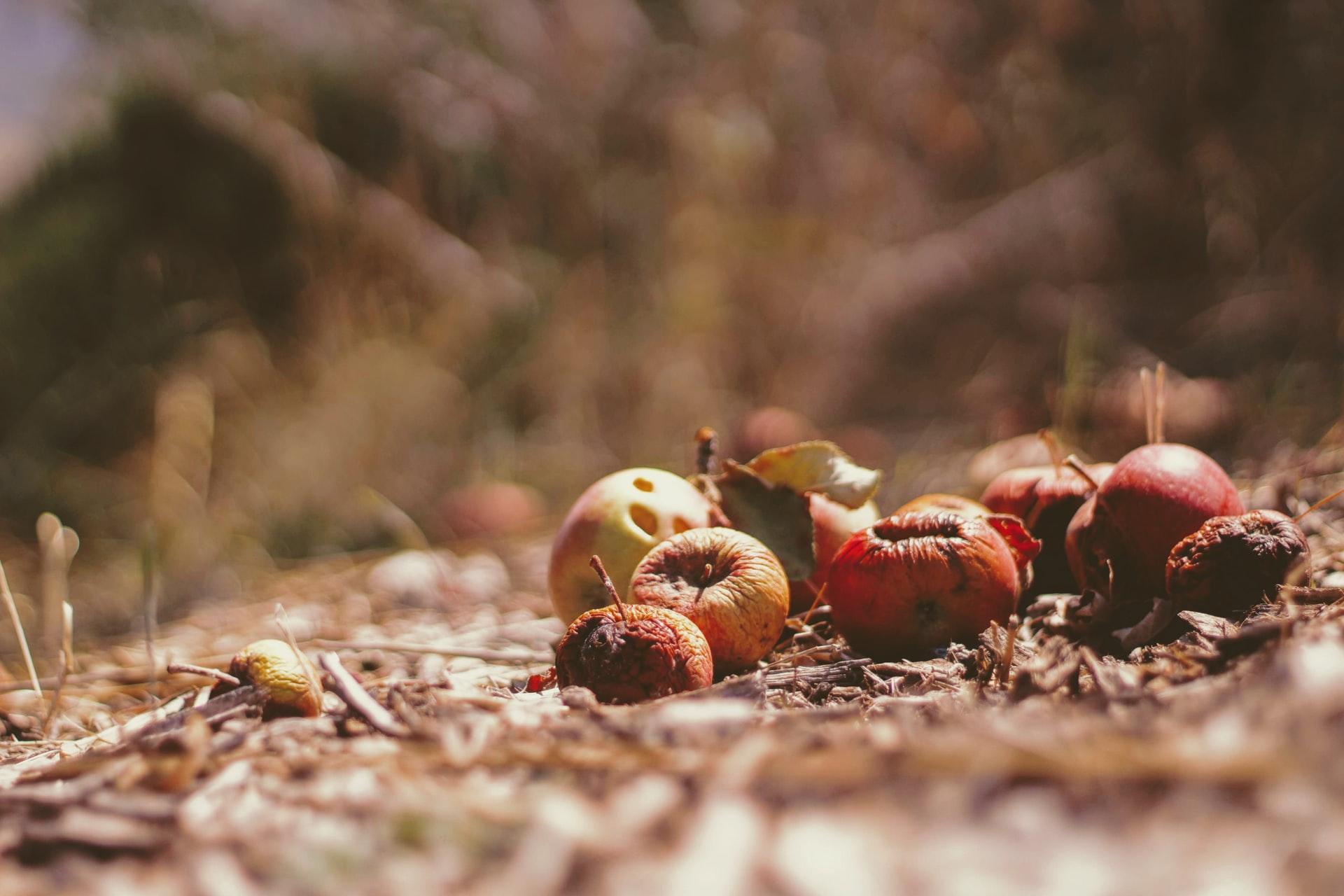 SDGs目標と食品ロス削減に向けた取り組み