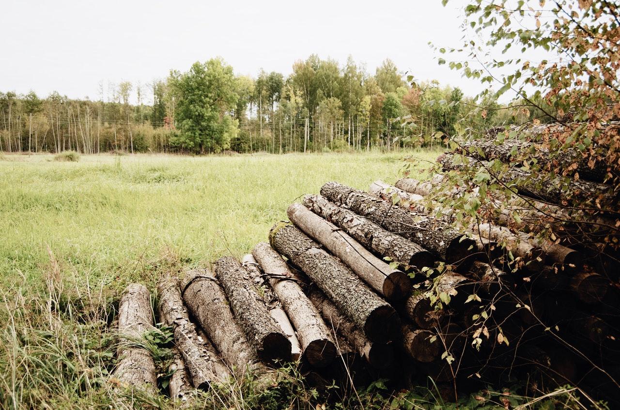 森林破壊が現状に至るまでの原因