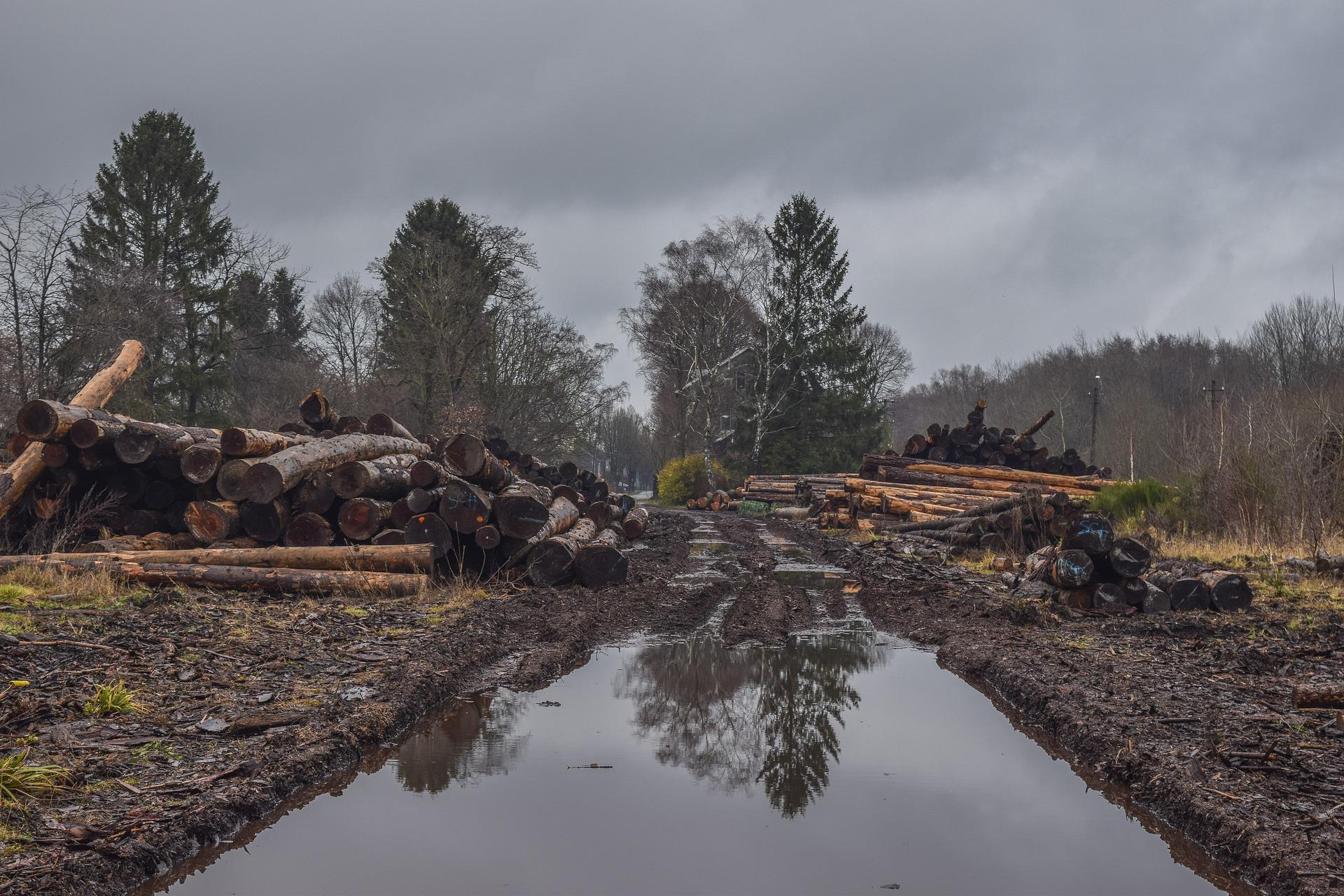 森林破壊の現状 具体的な問題は?