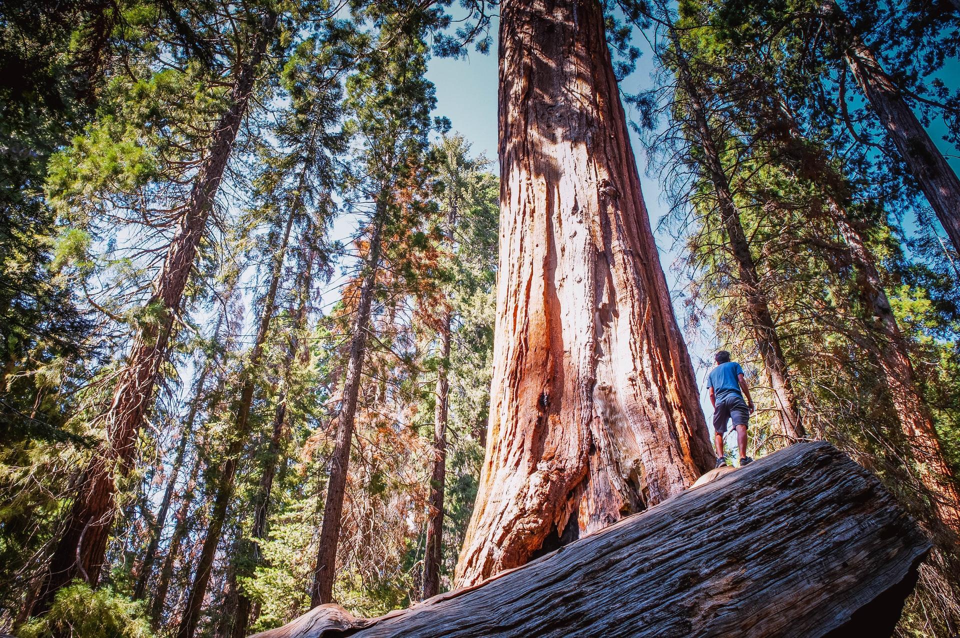 森林破壊が人類に与える影響