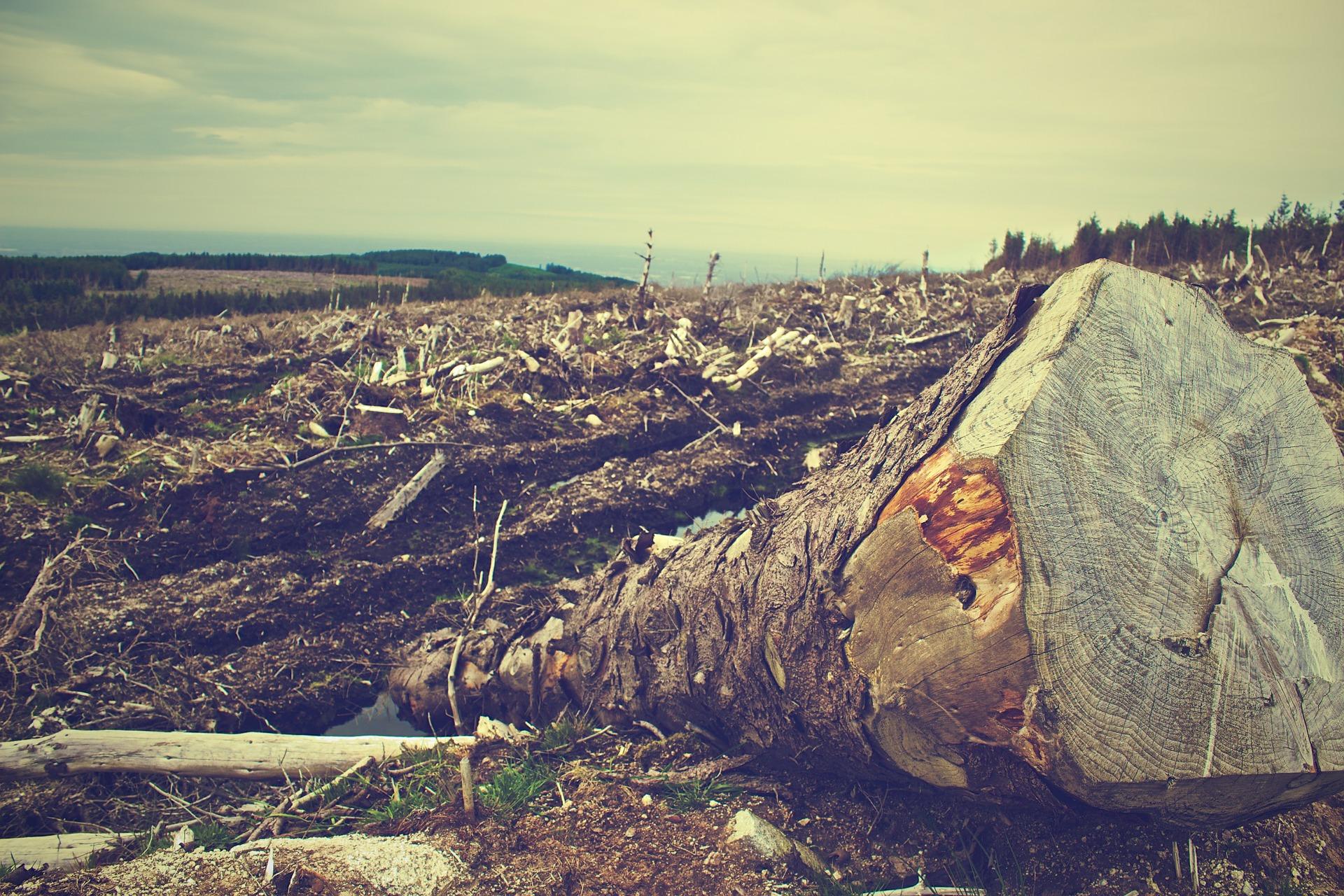 森林破壊についての基礎知識