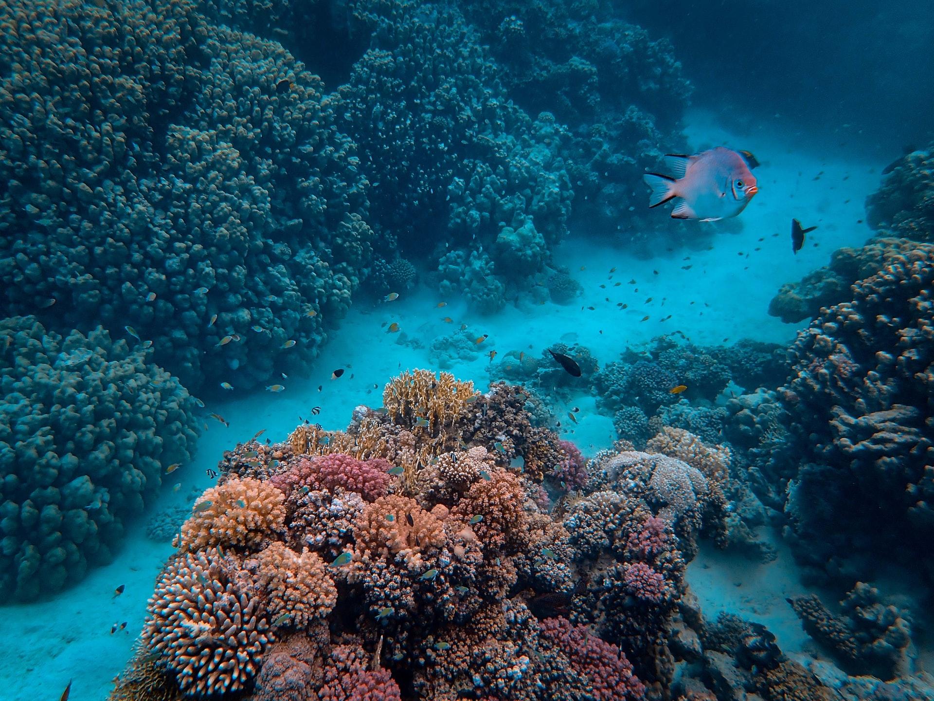 サンゴ礁が絶滅の危機?日本の海洋の現状とは
