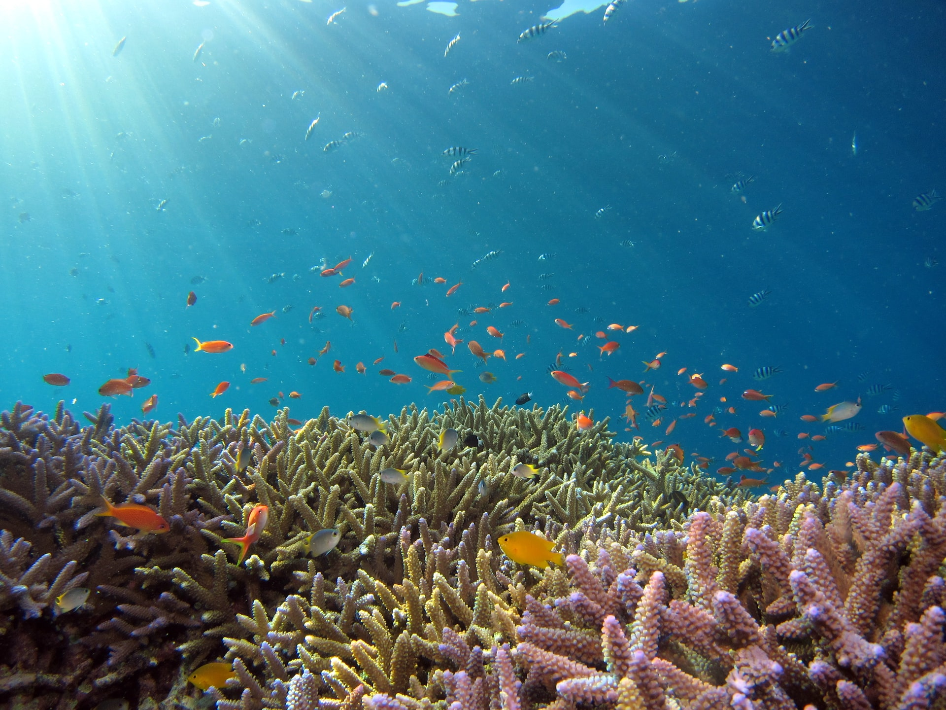 サンゴ礁の絶滅を防ぐために、できることを始めよう