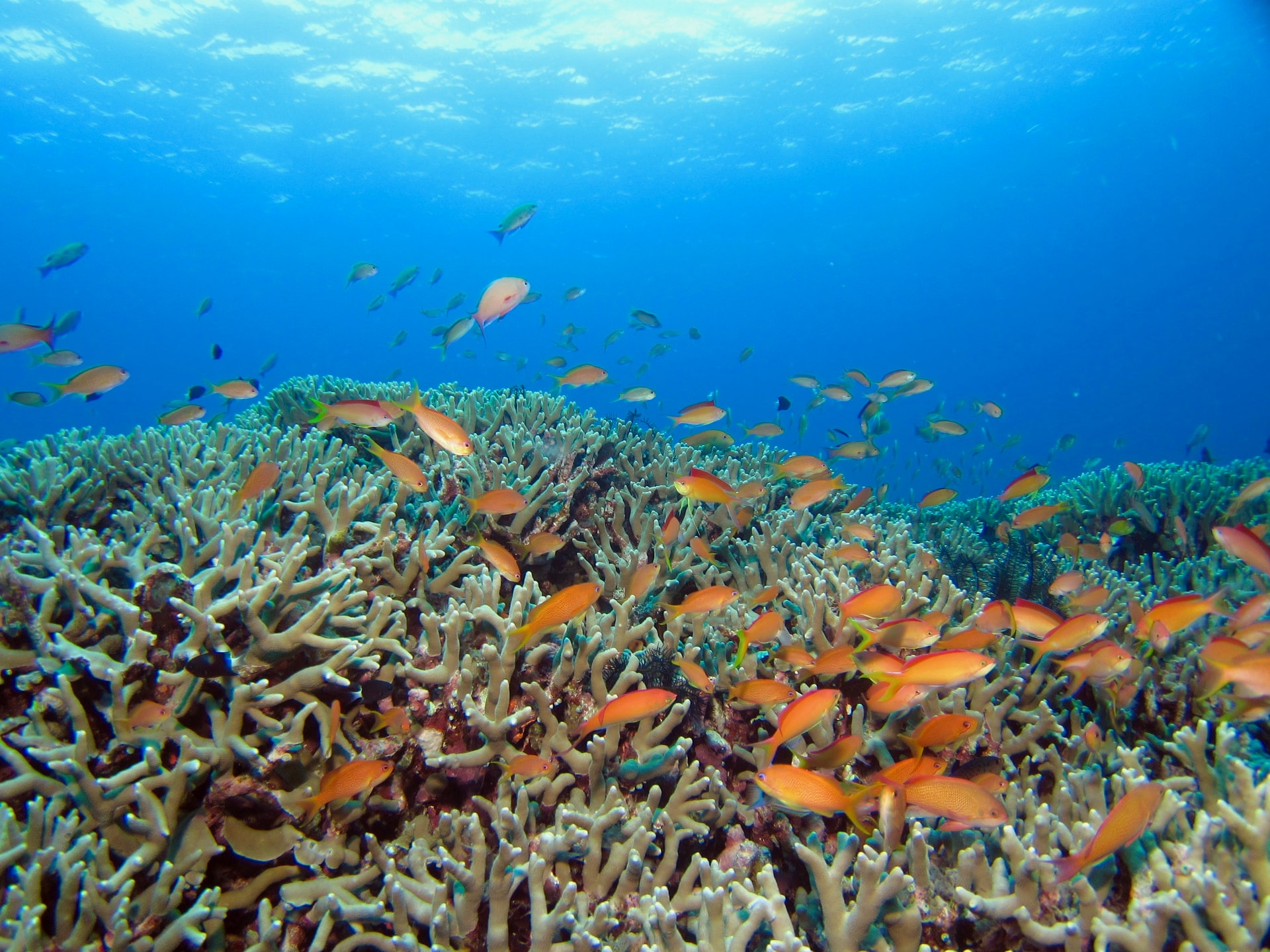 サンゴ礁がなくなると発生する問題は?絶滅の影響とは