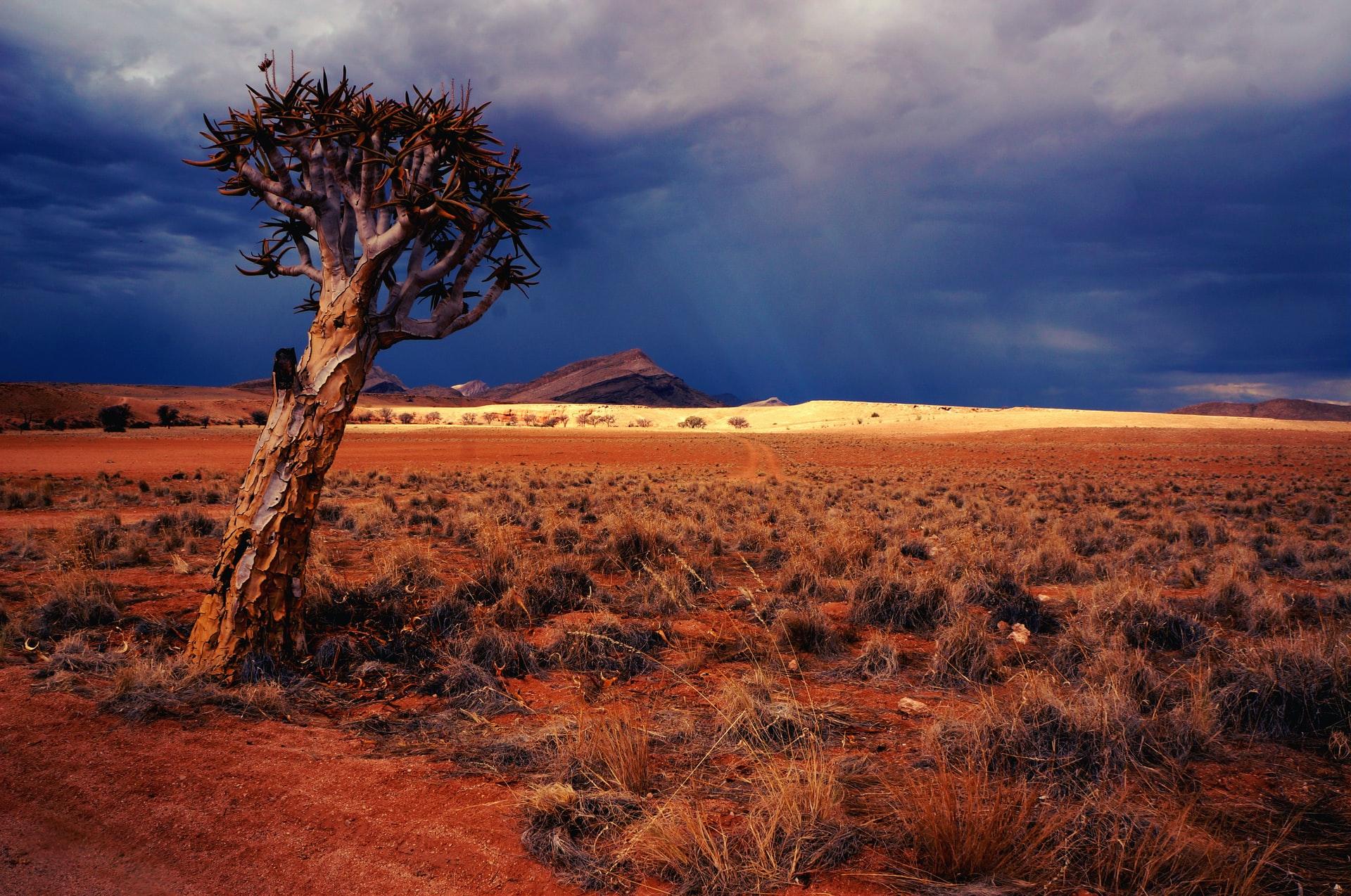 アフリカの砂漠化の現状