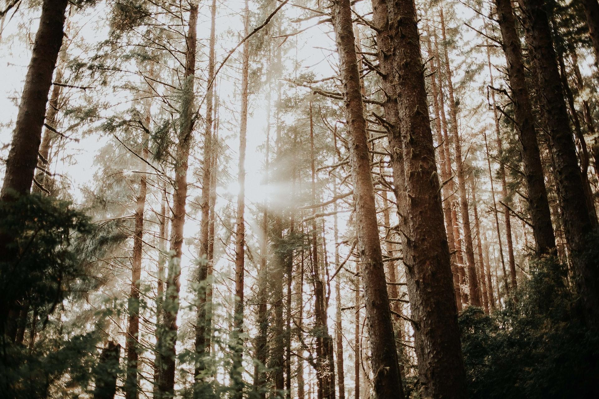 森林破壊が地球に与える影響