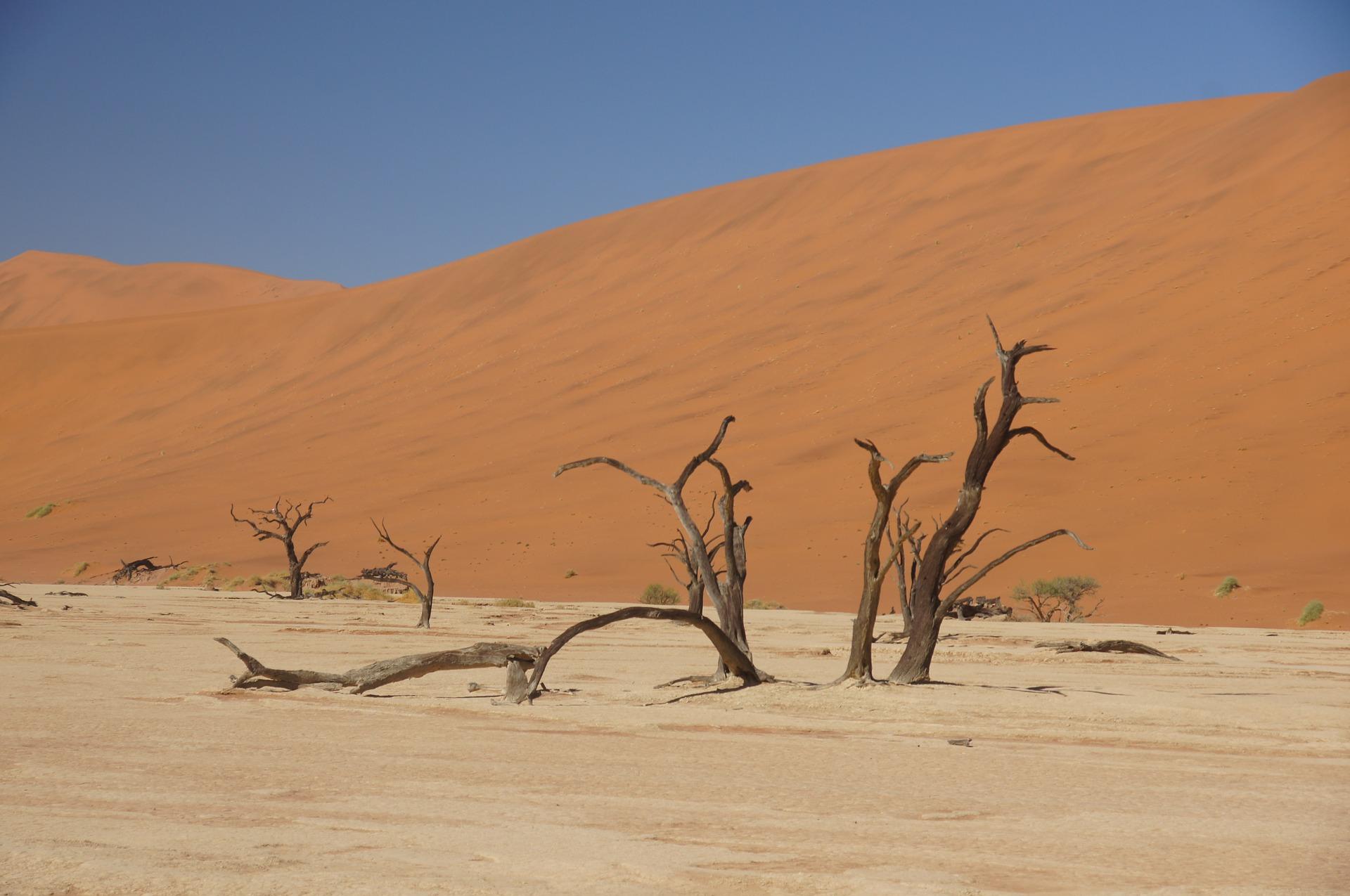 砂漠化の原因