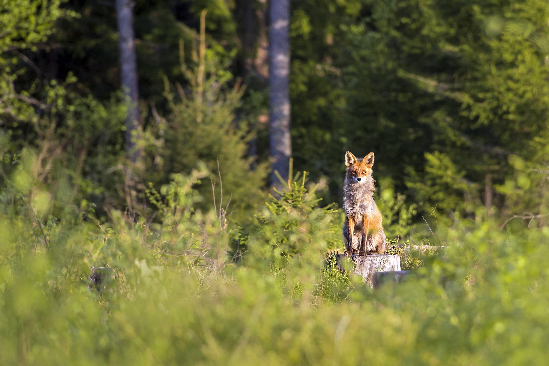 森林破壊が生物・生態系に与える影響