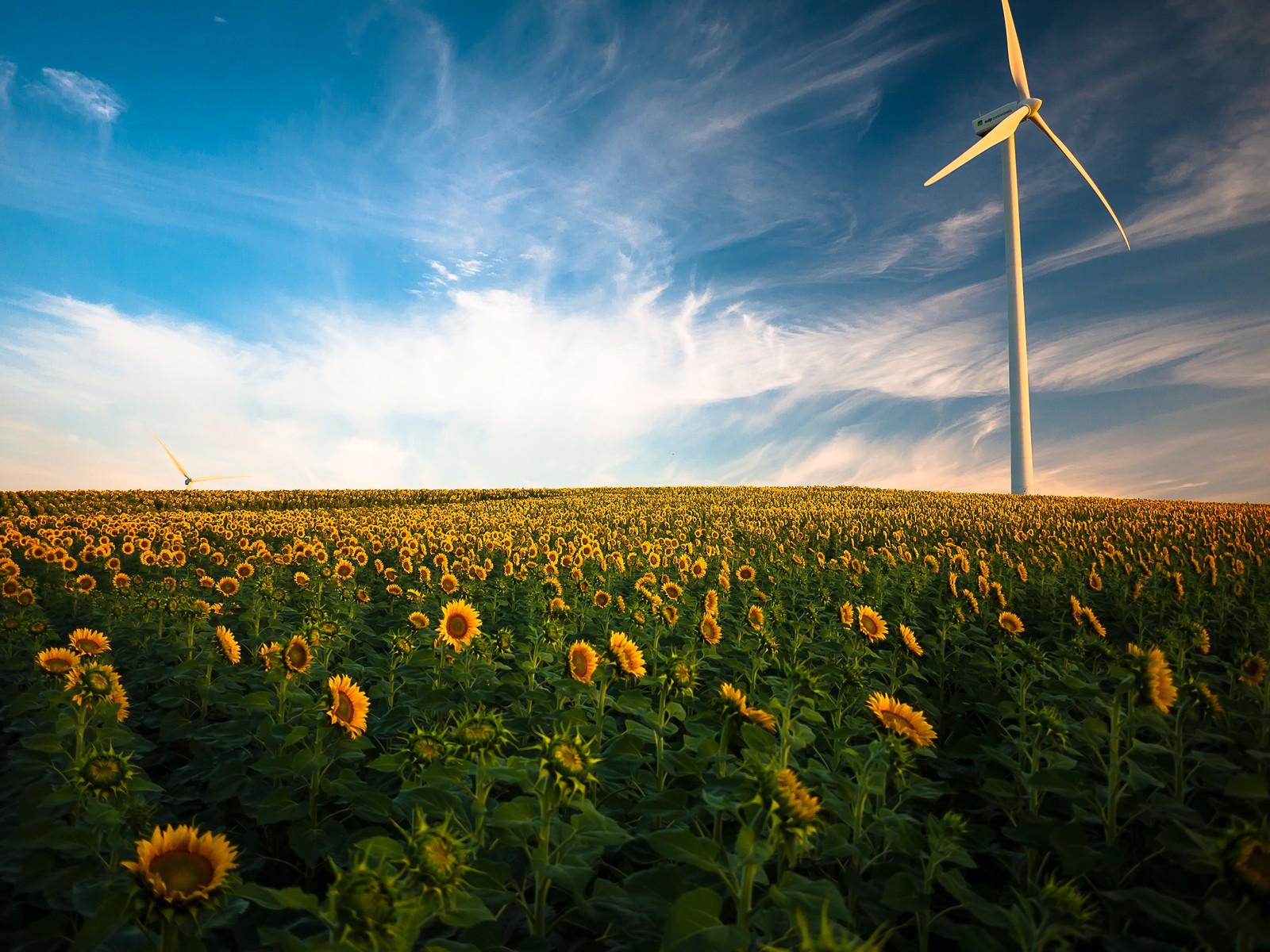 再生可能エネルギーの種類