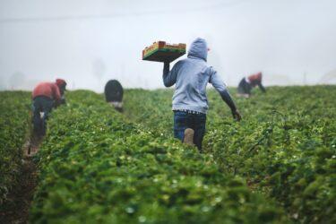 移住労働者とは?現状起きている問題も含め解説