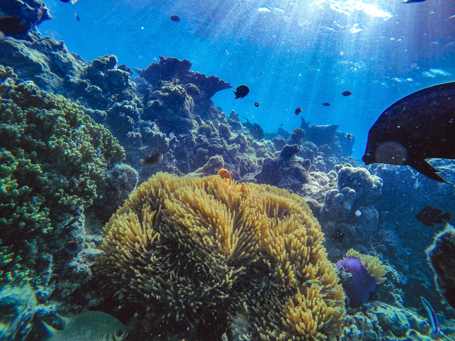 サンゴ礁が絶滅する3つの原因