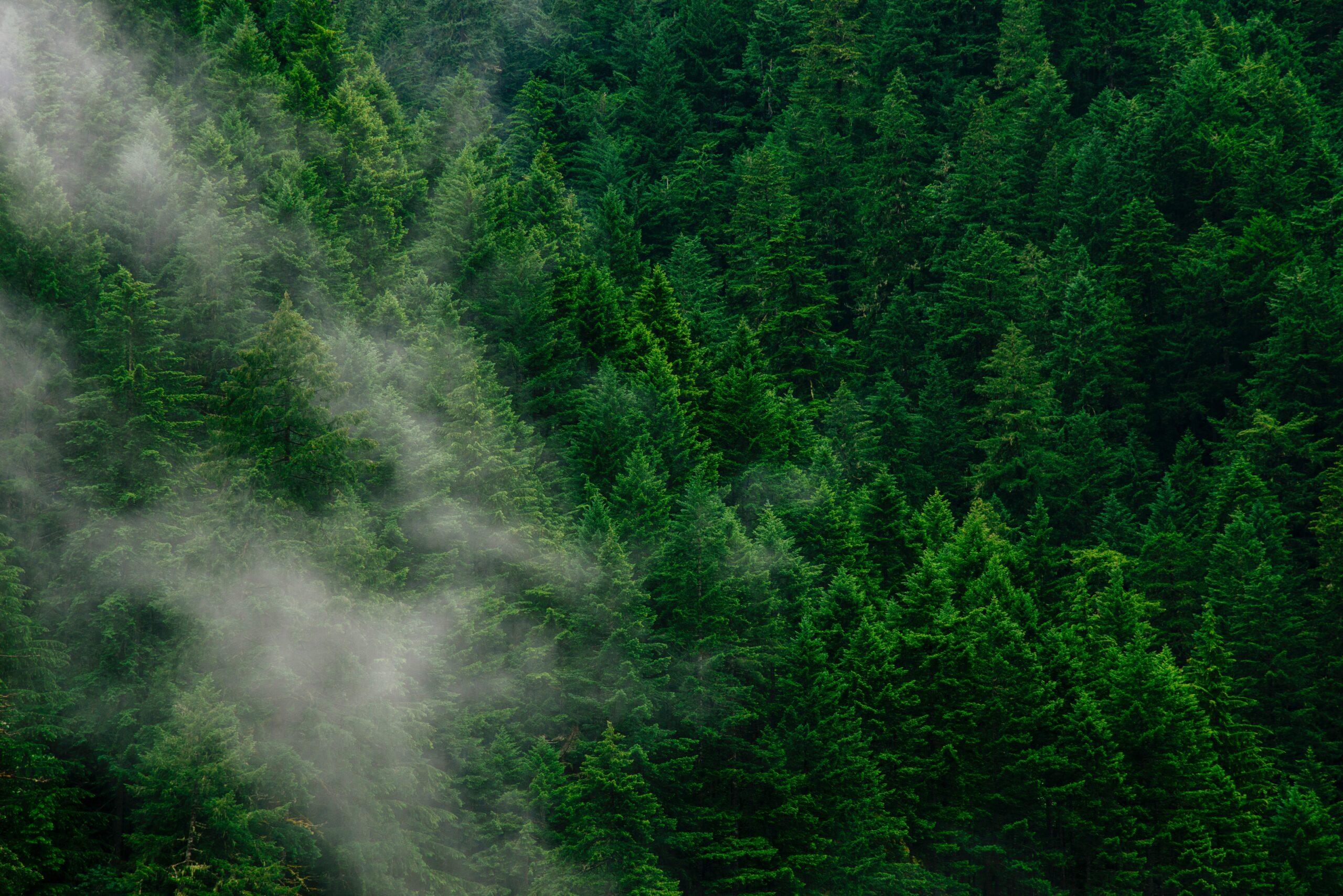 日本の森林における問題