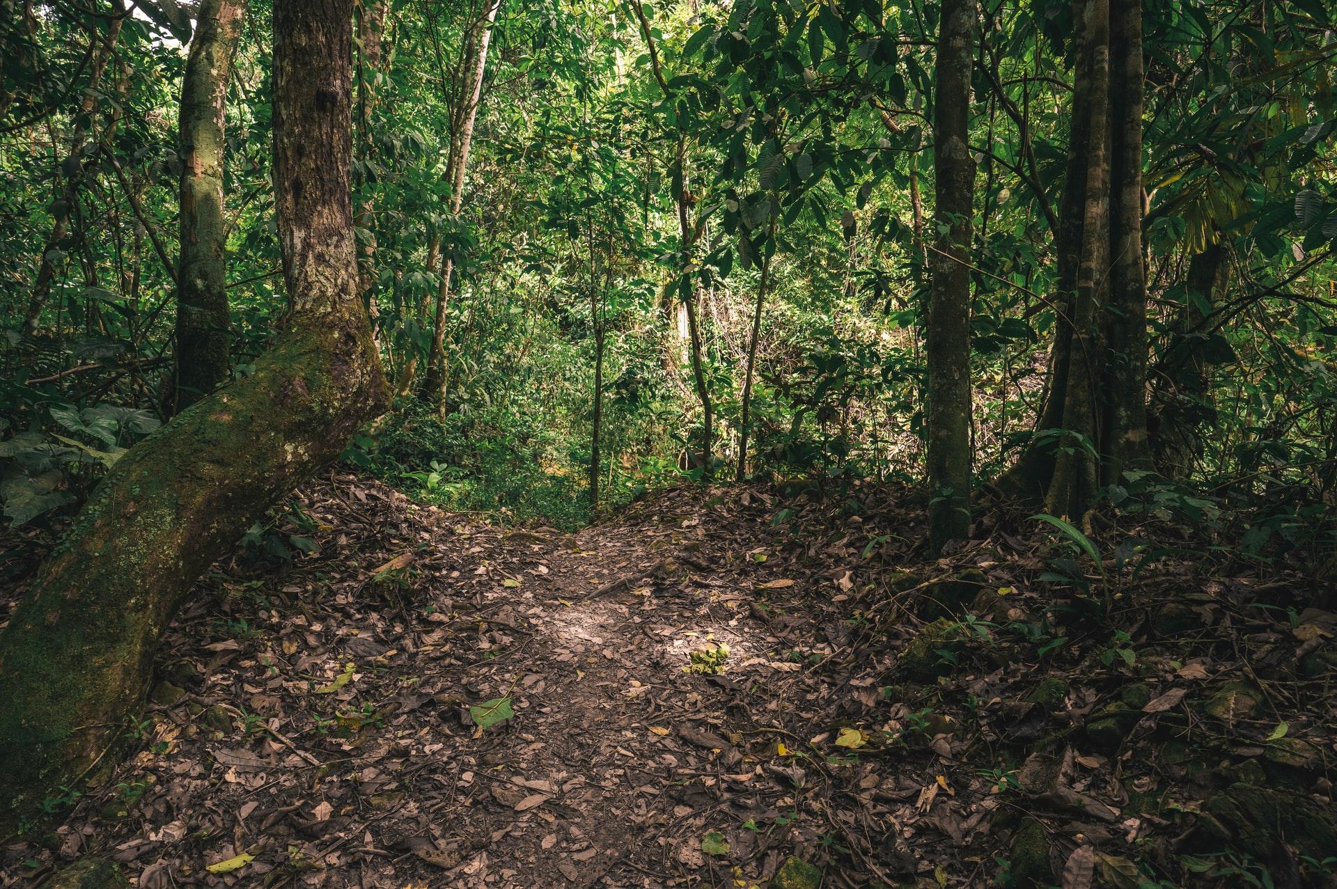 アマゾンにおける森林破壊の現状