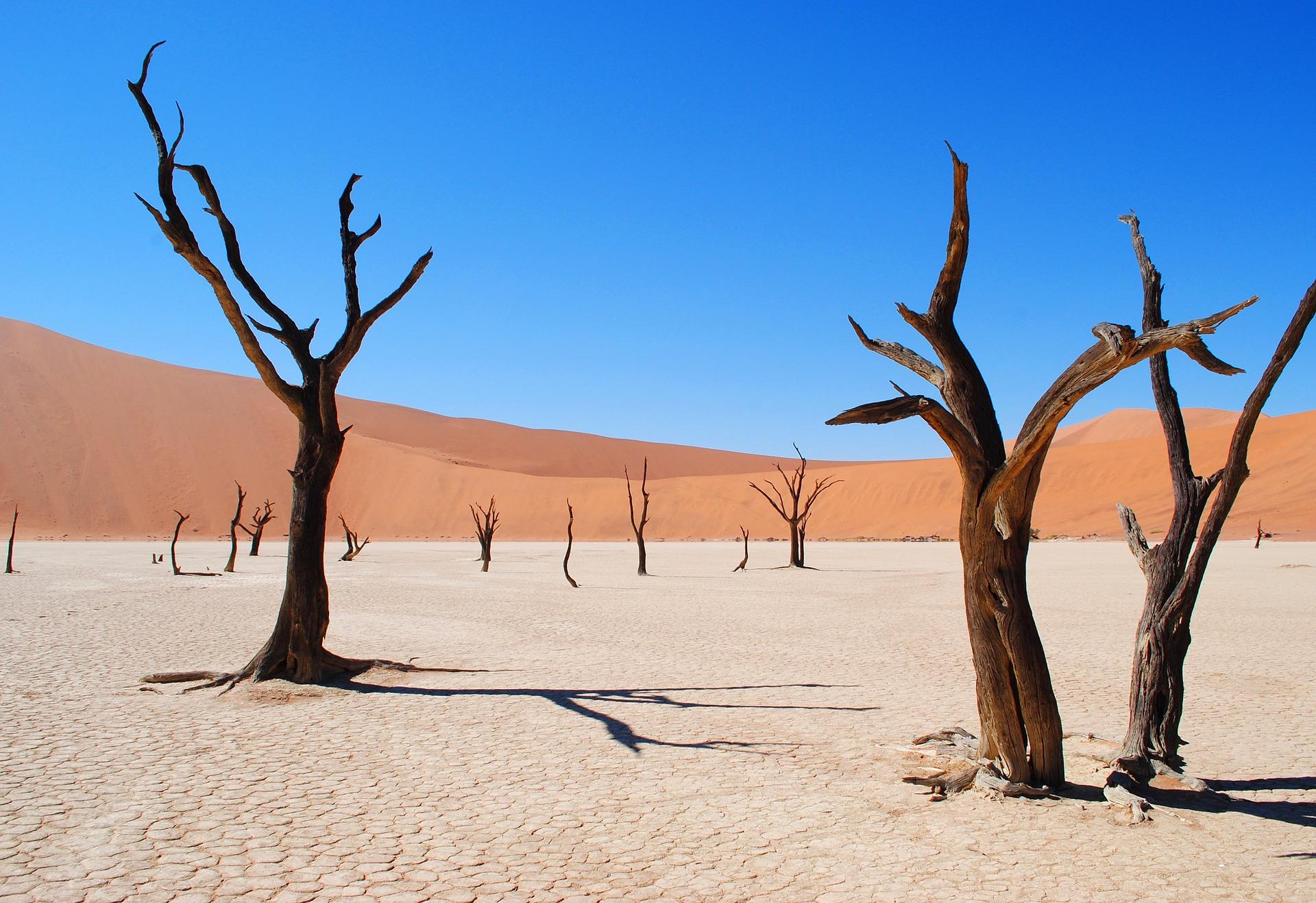 砂漠化とは?