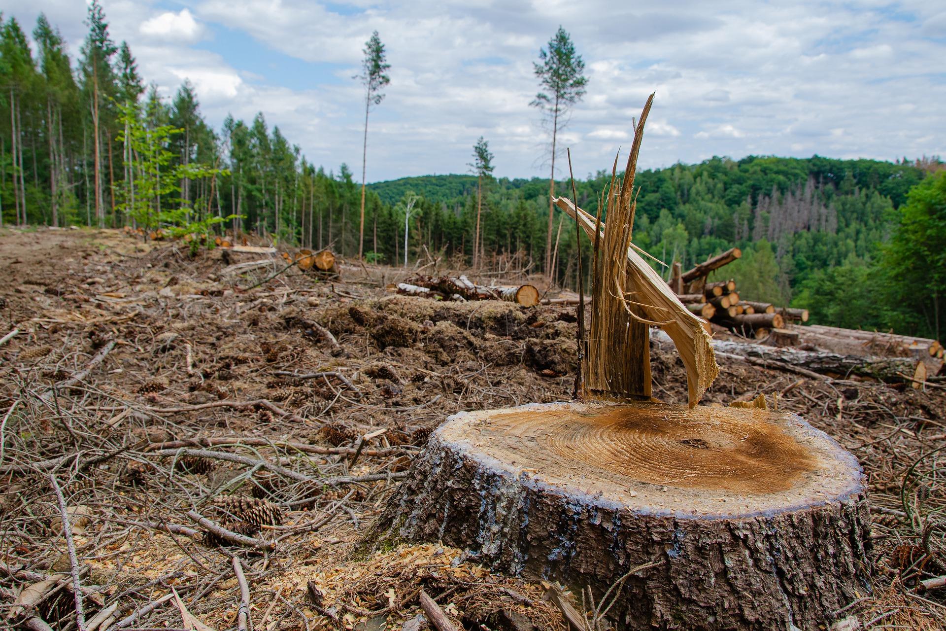 森林破壊はなぜ問題か