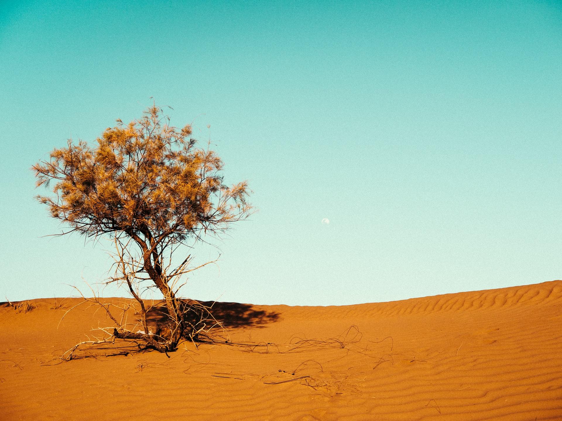 砂漠化による影響