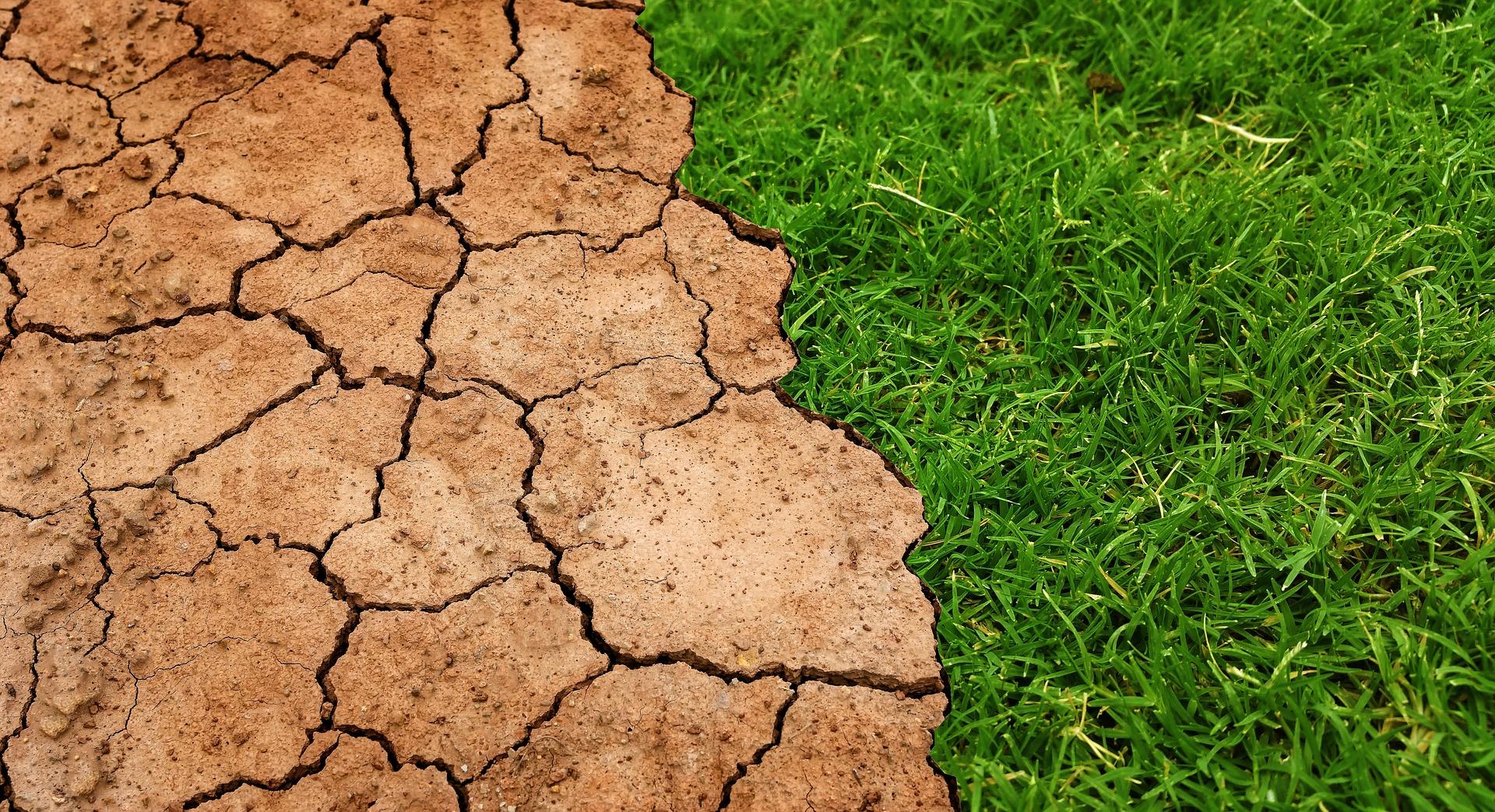 干ばつ対策としての日本の取り組み
