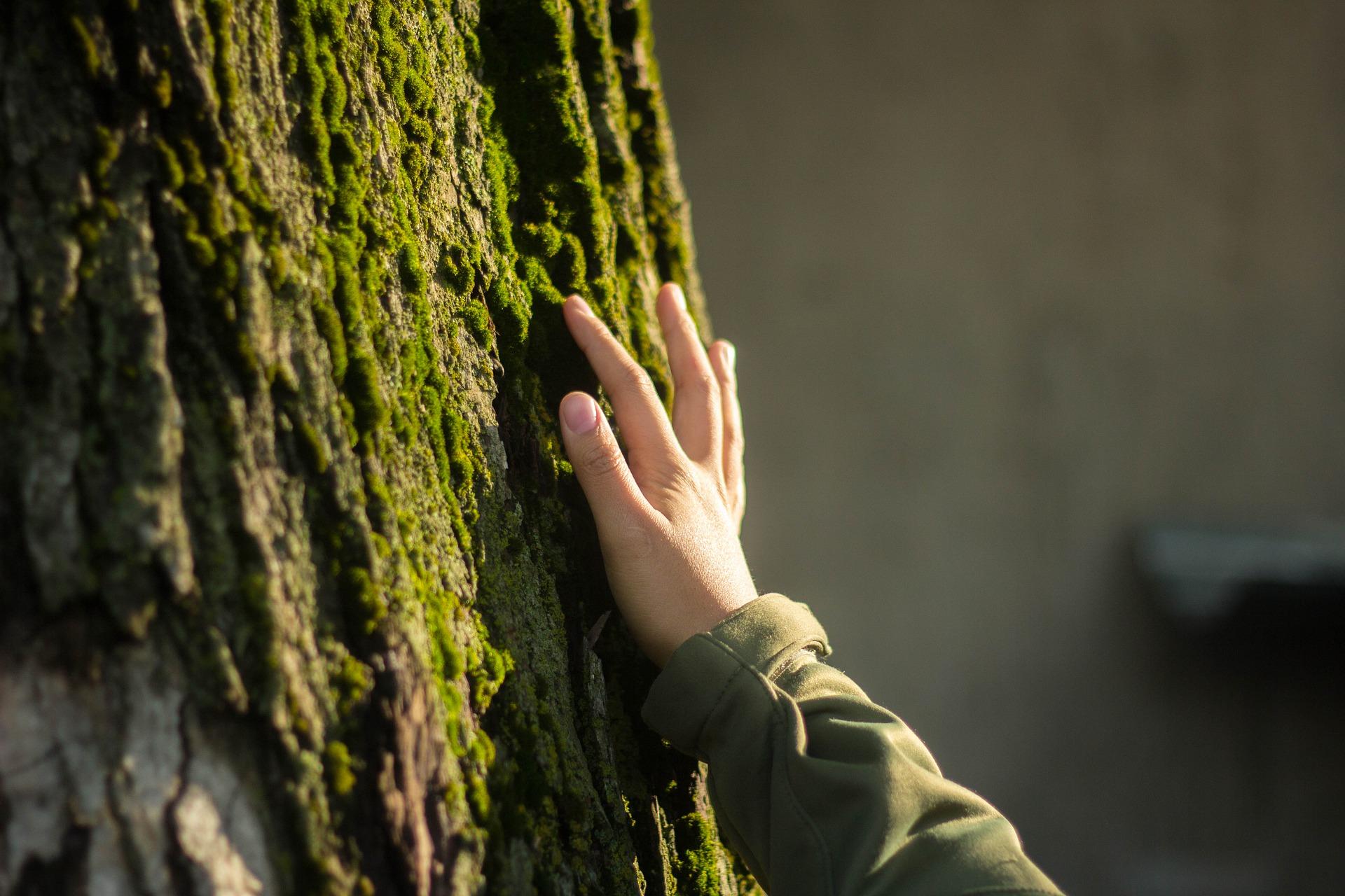植林活動はバランスが大事
