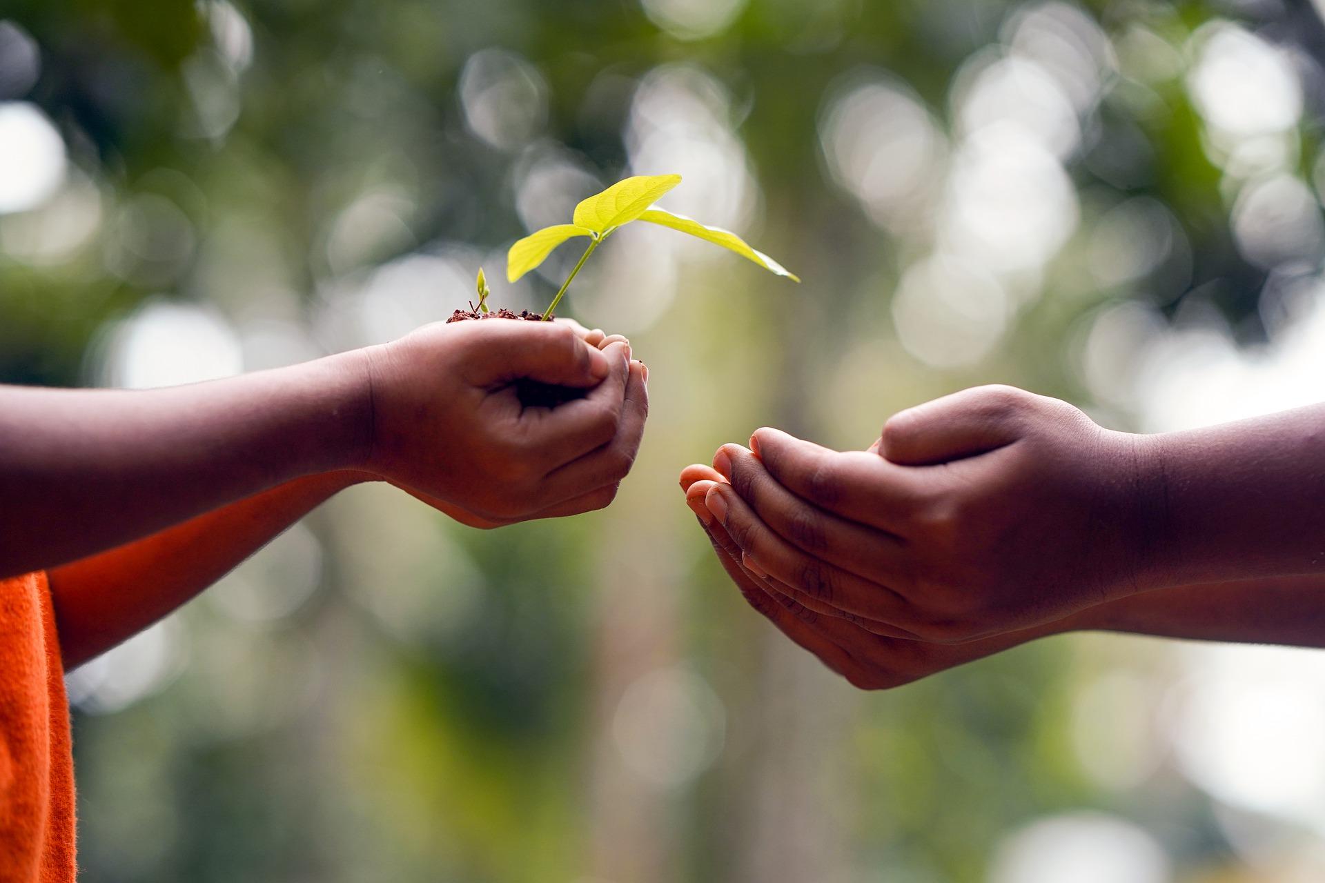 植林活動のメリット