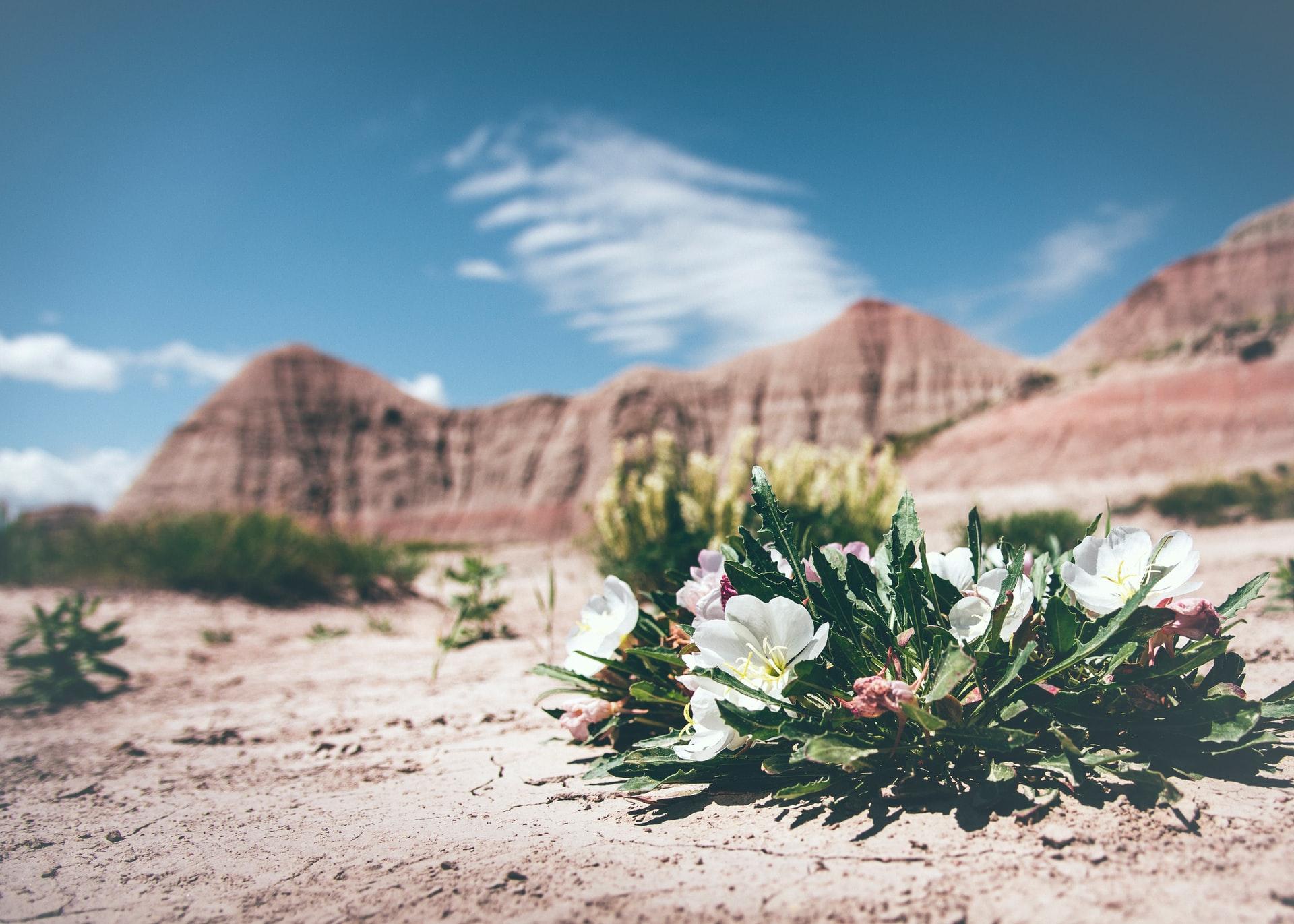 砂漠化への取り組みと対策