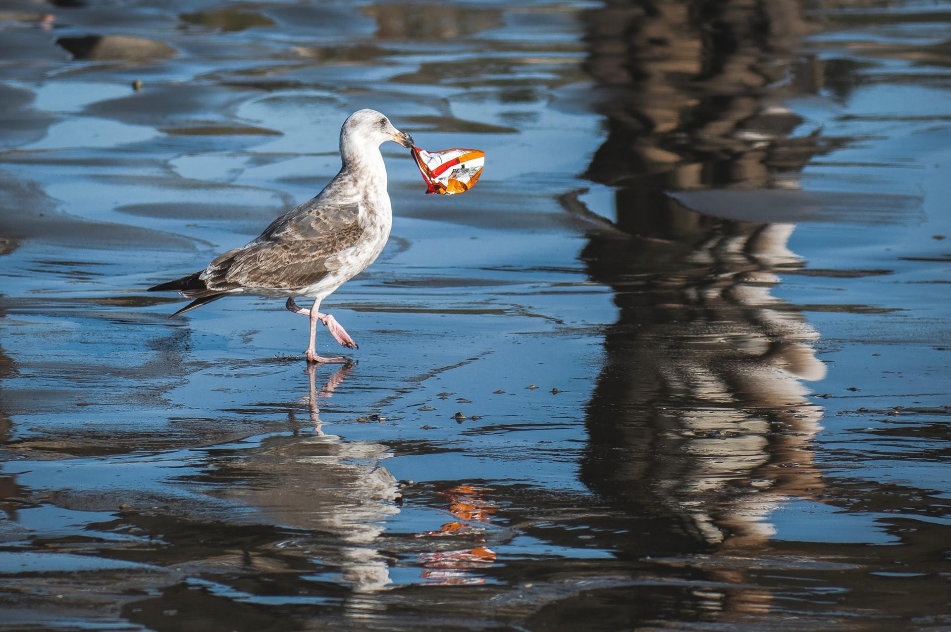 マイクロプラスチック汚染の広がり