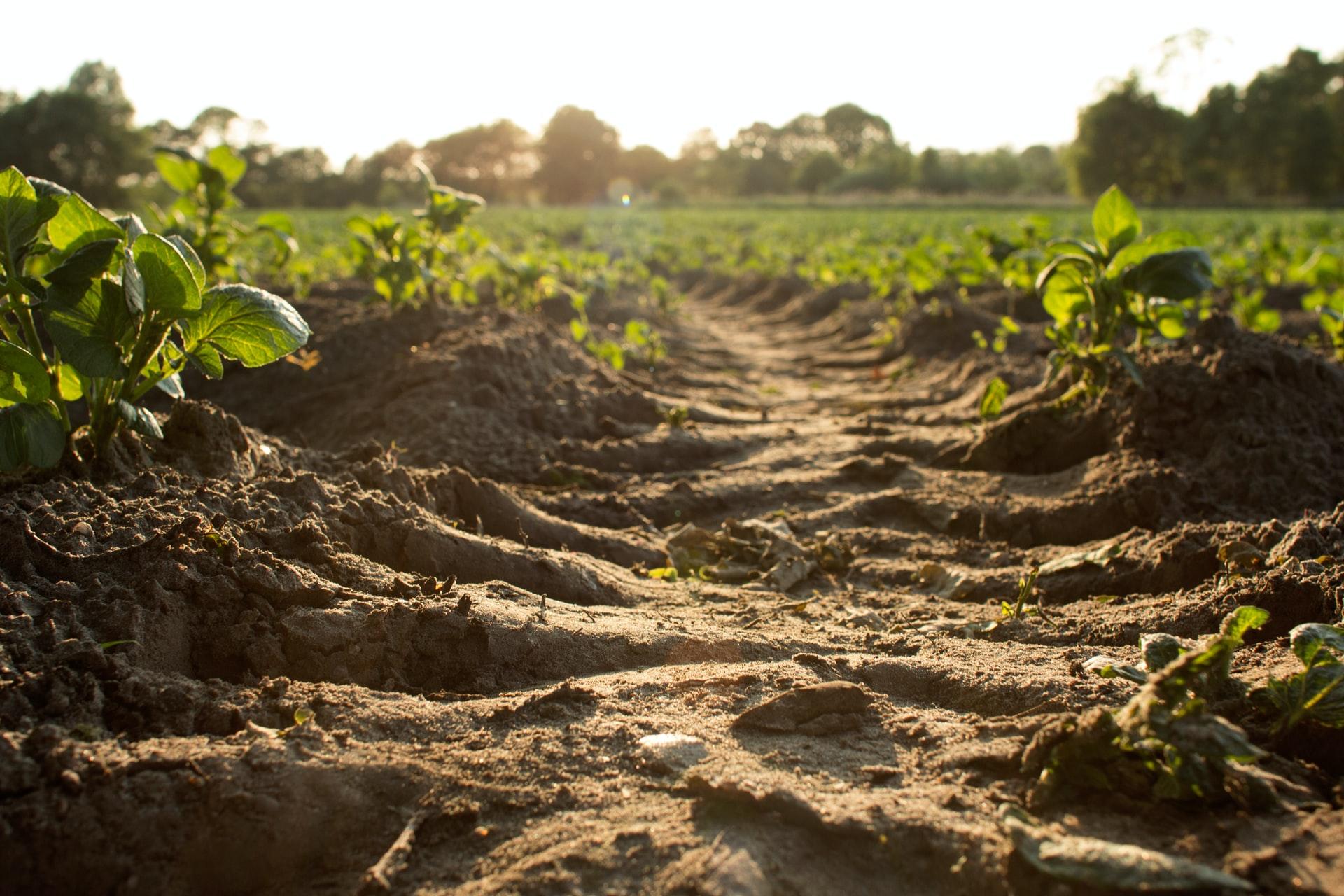 土壌汚染とは?