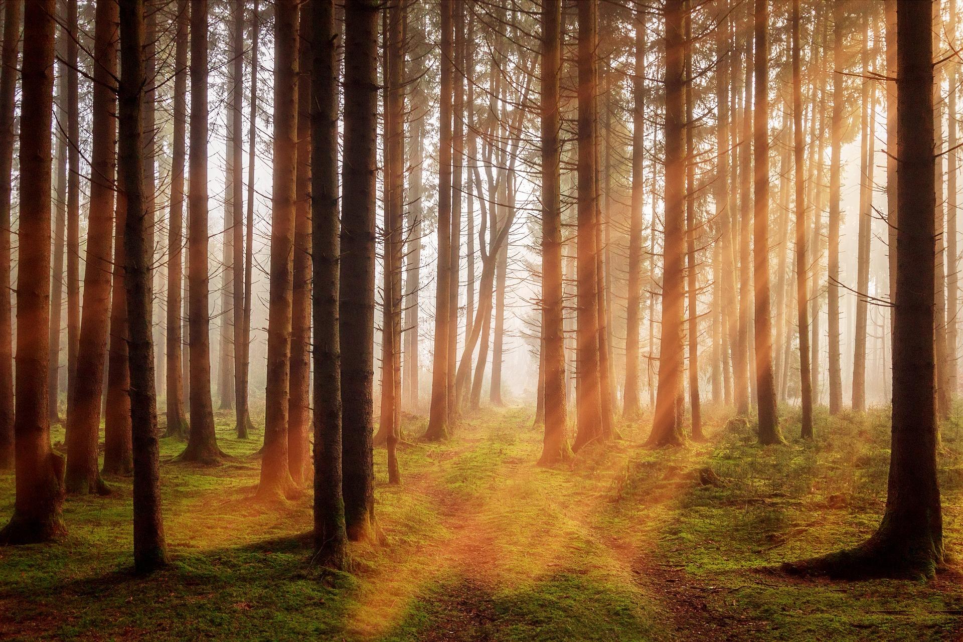 各国での違法伐採の取り締まり強化