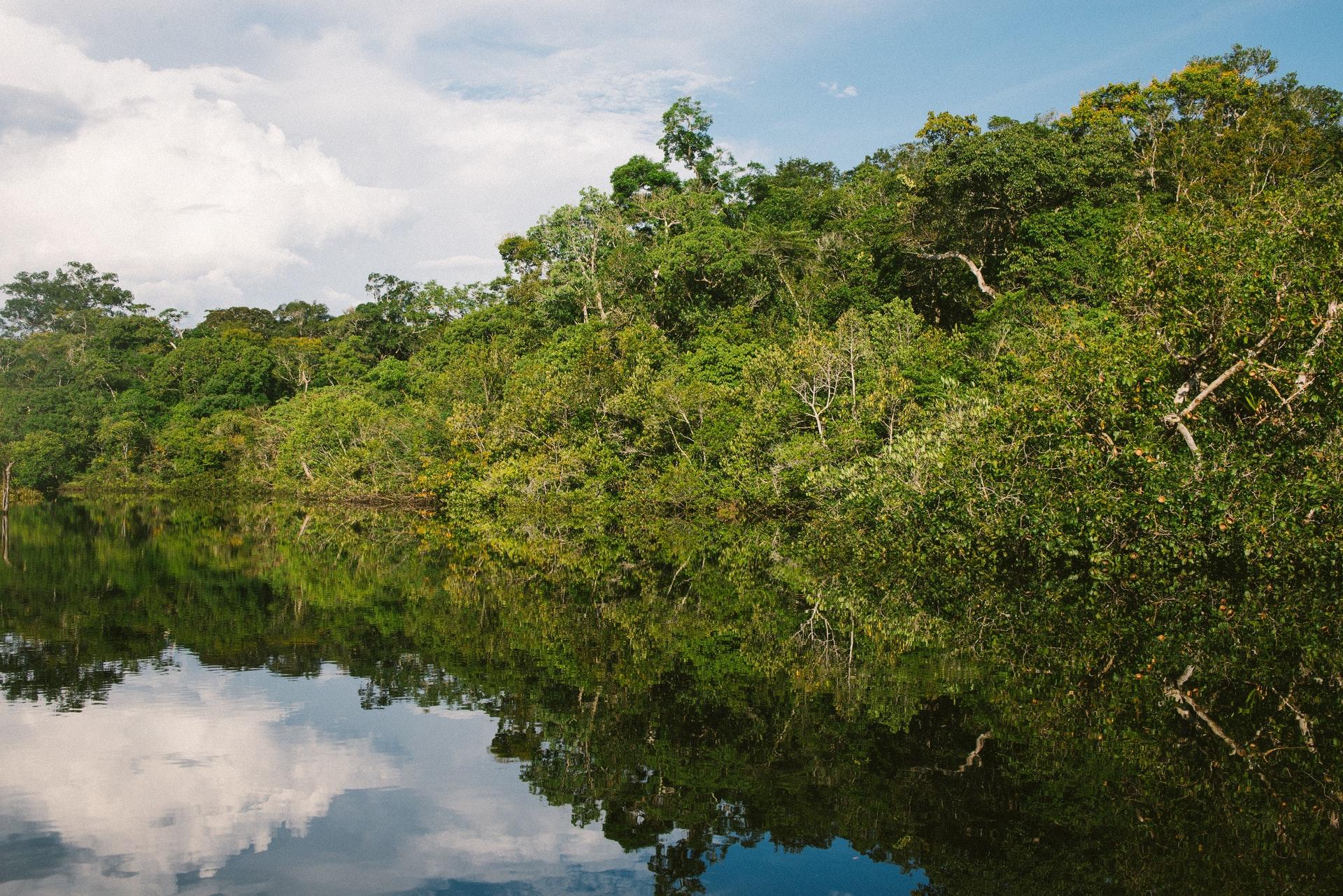 世界最大の森林消失国のブラジル