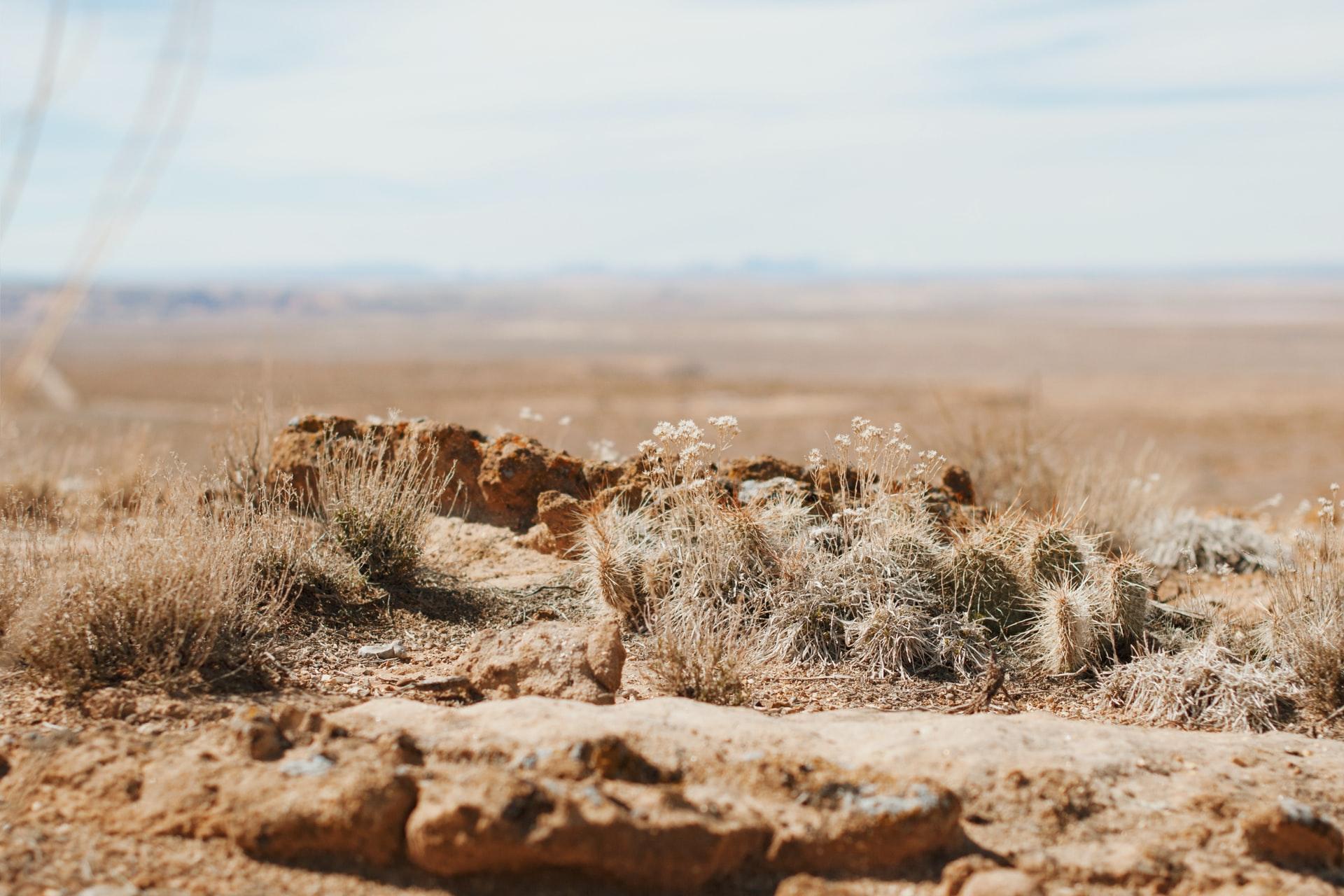砂漠化の原因と影響