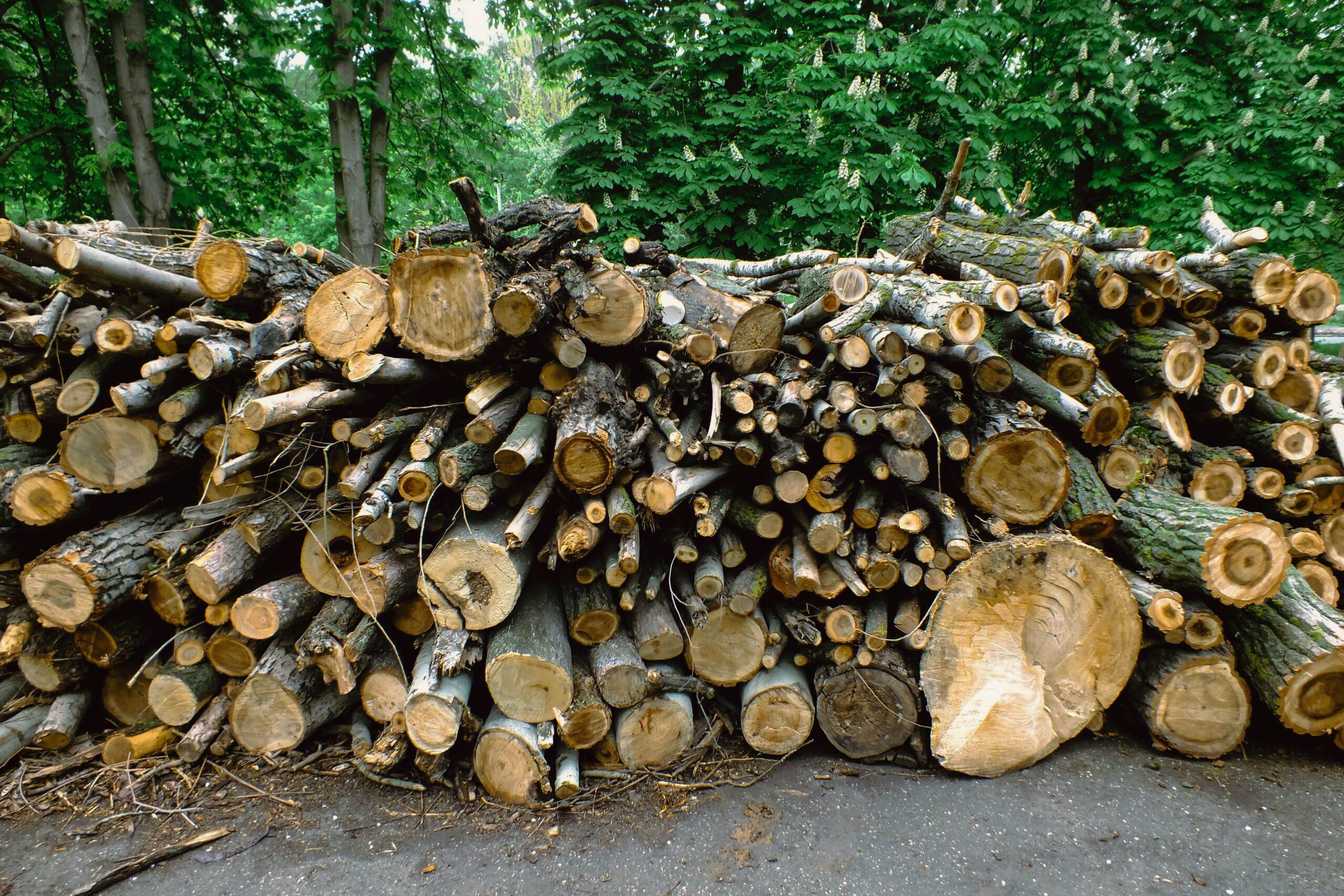 日本は森林大国でありながら森林輸入国