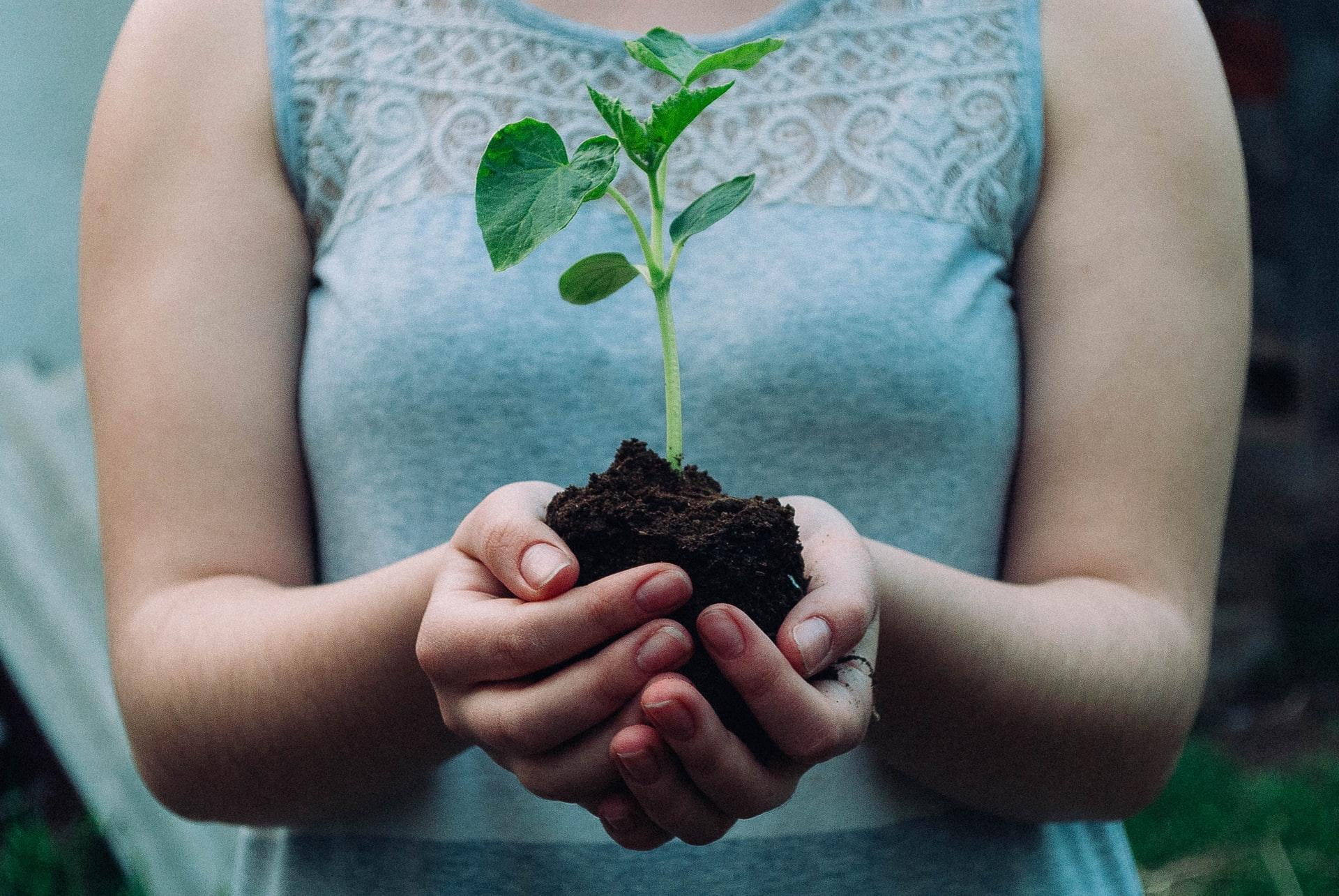 企業の植林活動を応援しよう