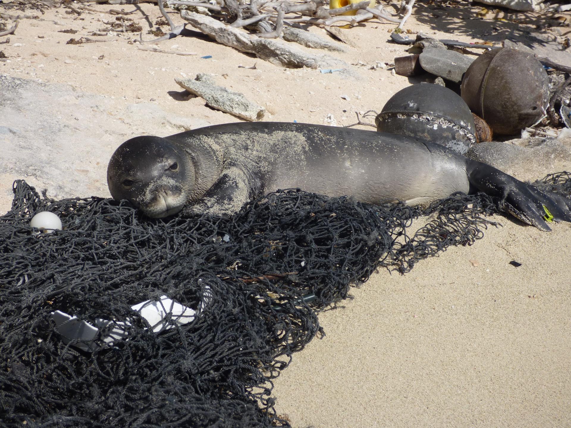 油による海洋汚染の海洋生態系への影響とは?